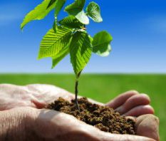 10 Facts About Trees and How Trees Help Save the Environment